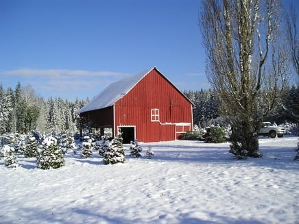 christmas tree farm - How To Start A Christmas Tree Farm