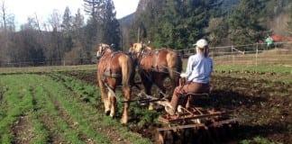 furrow horse farm