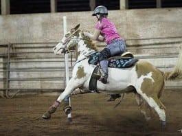 wf west equestrian