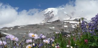 mount rainier lodging