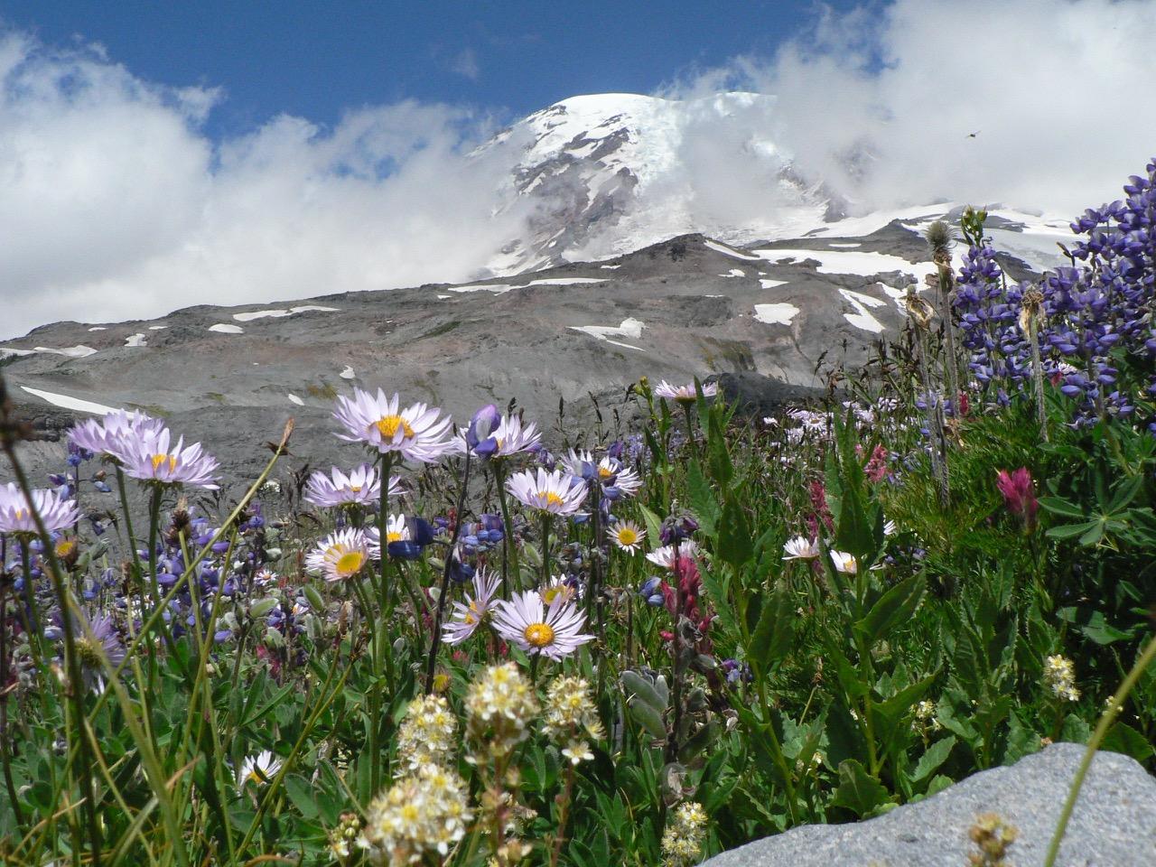 Take in the splendor of mount rainier s wildflowers for Indoor gardening rainier oregon