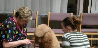 therapy dog college