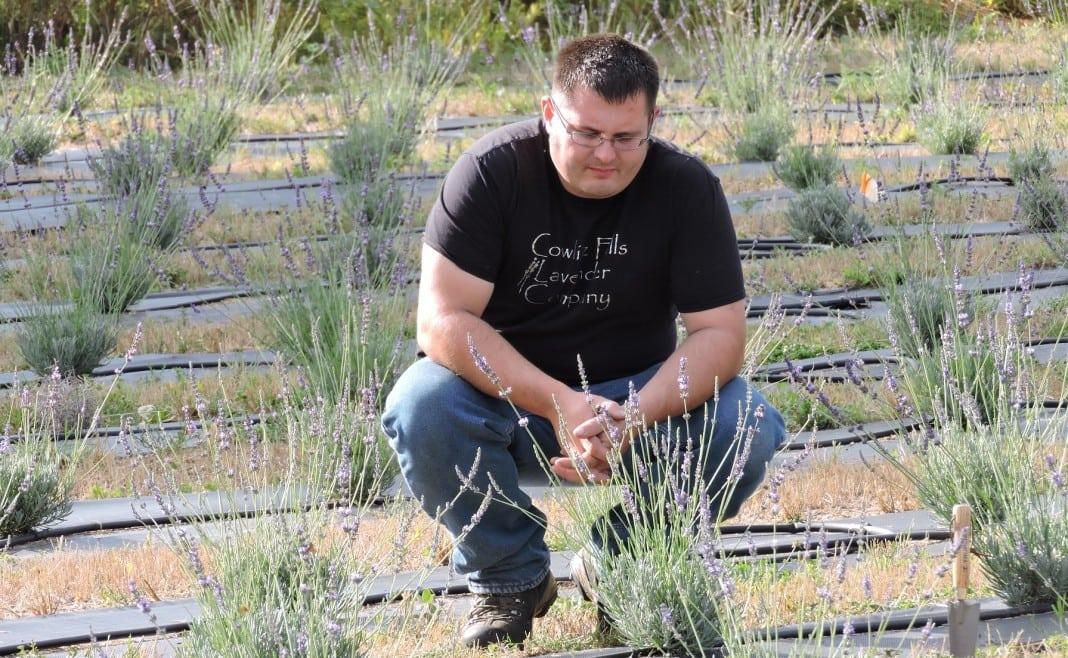 lavender farm randle
