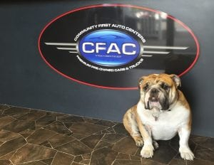 Bogie is happy to welcome all visitors to the Community First Auto Center office. Photo credit: Nancy Keaton.