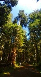 Mt Rainier Bike Trails