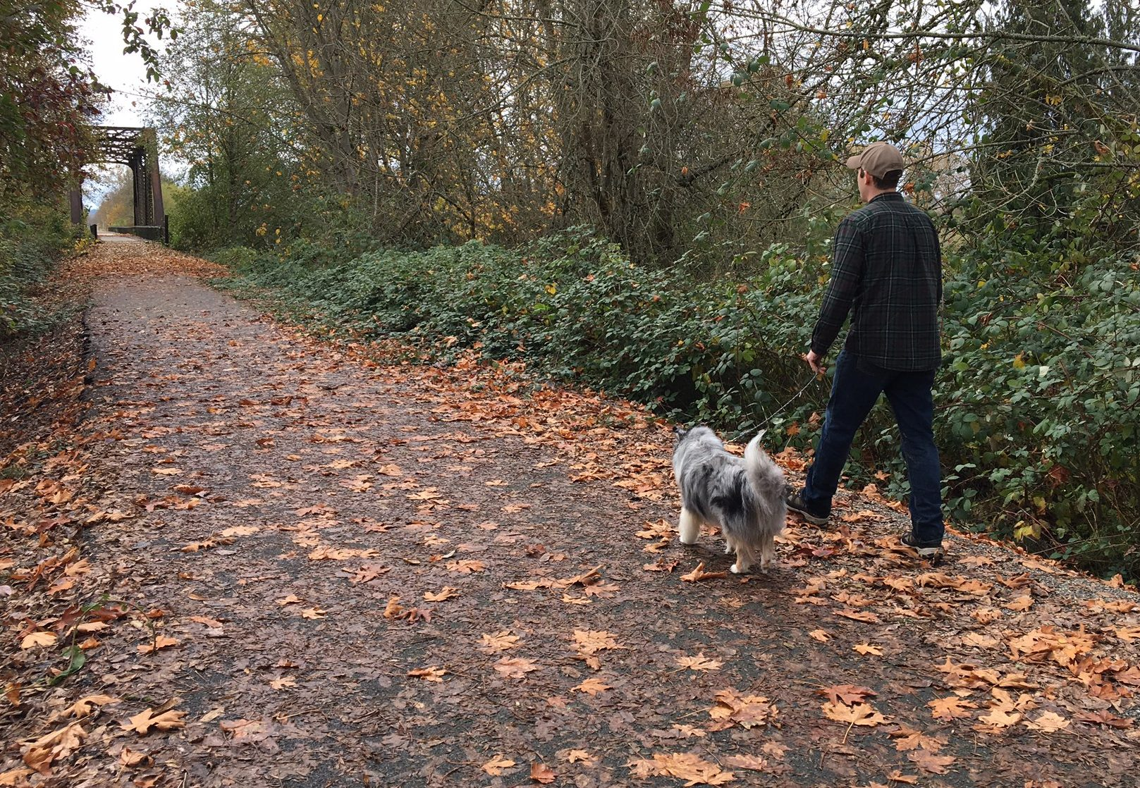 Best Dog Walks in Lewis County for Wet Weather - LewisTalkWA