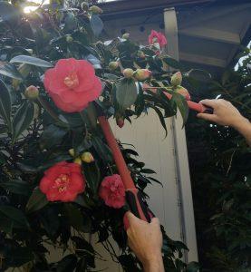 Pruning landscaping