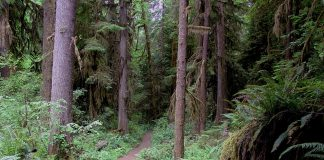 Trail running Lewis County