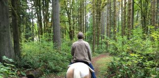 Lewis County Horse Trails