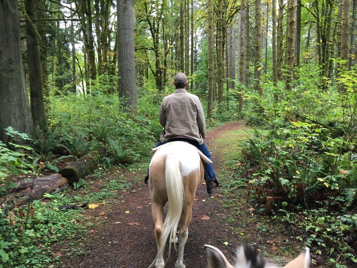 نتيجة بحث الصور عن Horseback riding + forest