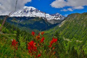 Mount Rainier Stevens Canyon