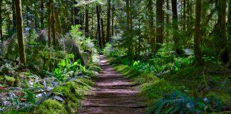 Carbon River Rainforest
