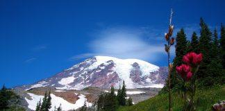 Mt Rainier Wildflowers