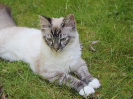 Pet Friends of East Lewis County