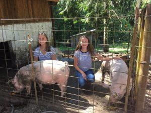 FFA Pigs