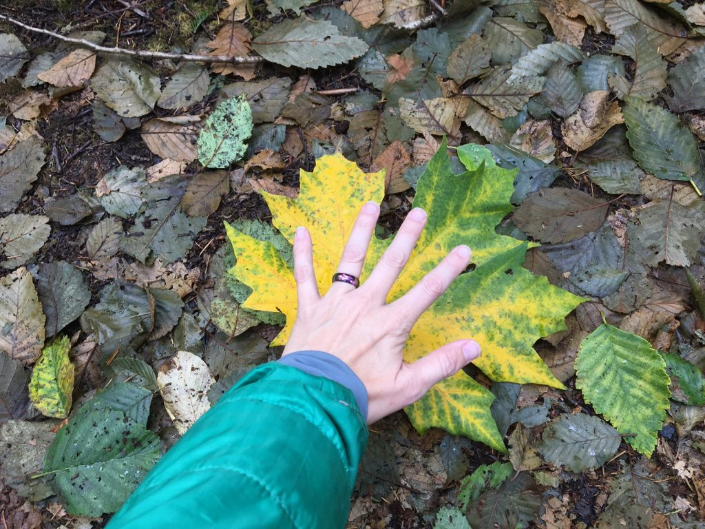 Lewis County Fall Leaf Tour
