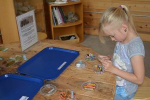 Nature Play at Hands On @ Hands On Children's Museum | Olympia | Washington | United States