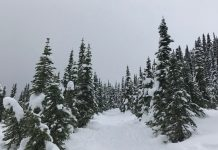 ski trails in Lewis County