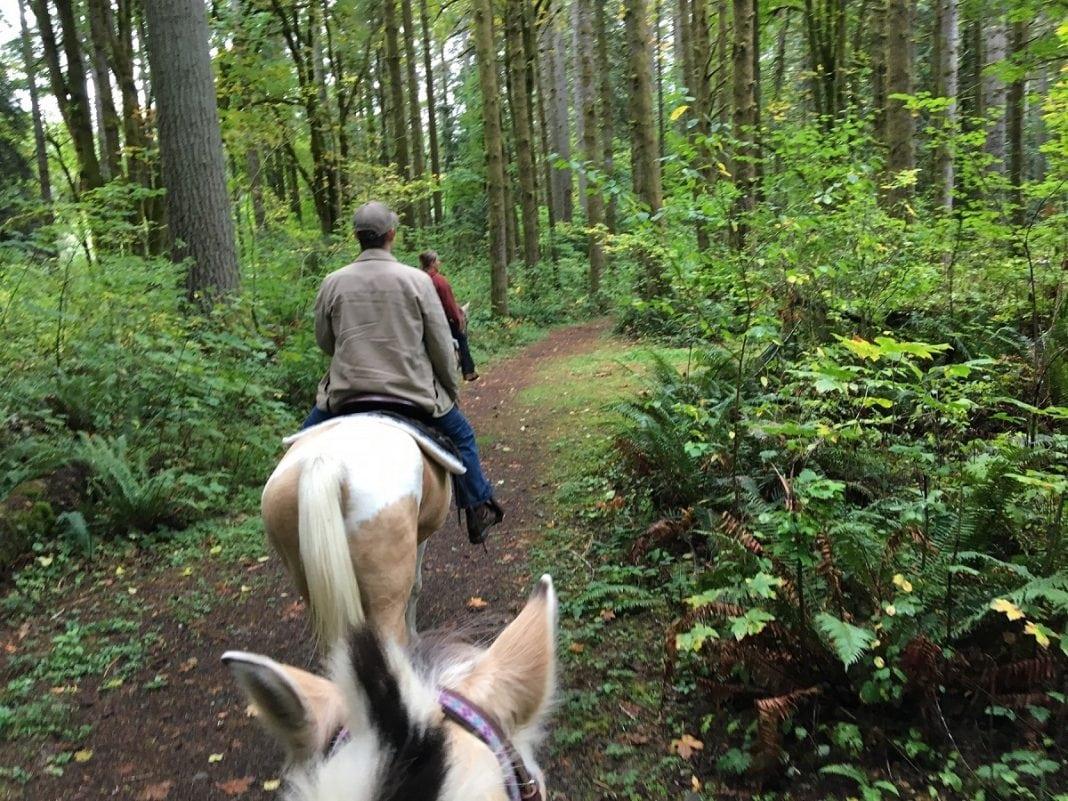 Willapa Hills Trail