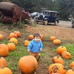 Pumpkin Patches Lewis County