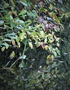 China Creek Centralia