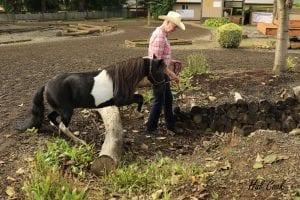 Bolender Horse Park Mountain Trail Schooling Challenge @ Bolender Horse Park