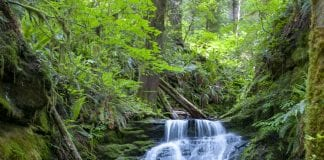 Lewis County Waterfalls