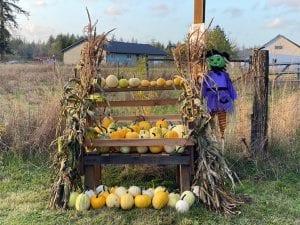 Fairytale Farm's Contactless Pumpkin Patch