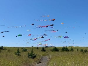 Grays Harbor kite