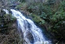 Olympic Peninsula Waterfalls