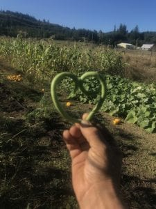 Lewis County Community Supported Agriculture