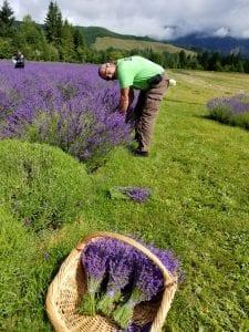 Cowlitz Falls Lavender Company