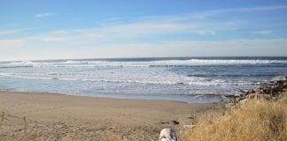 Grays Harbor Beach