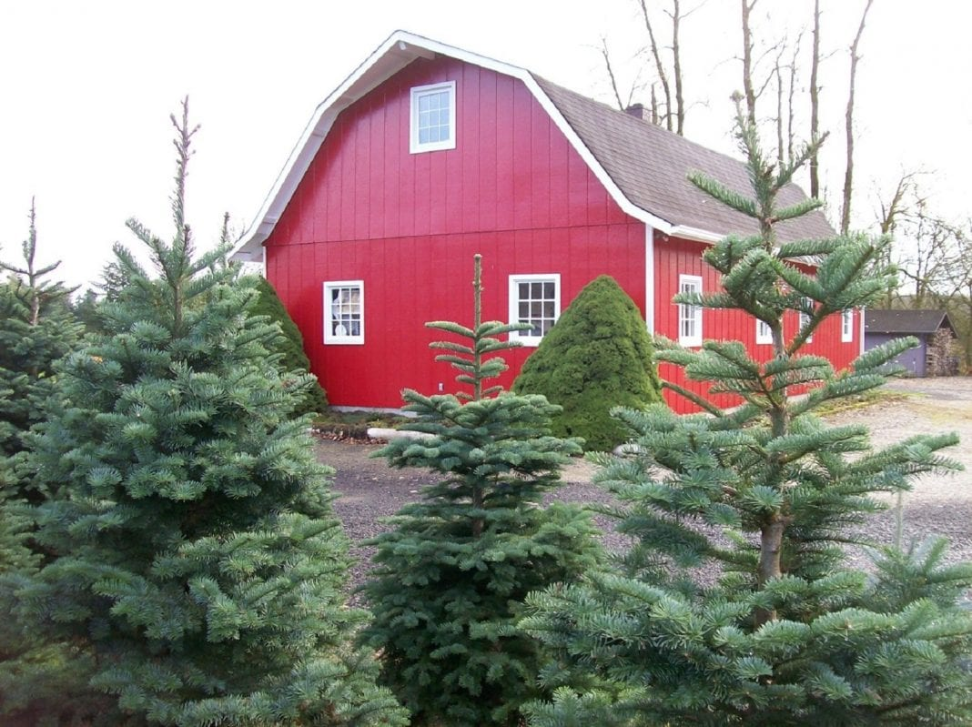 Lewis County Christmas Trees